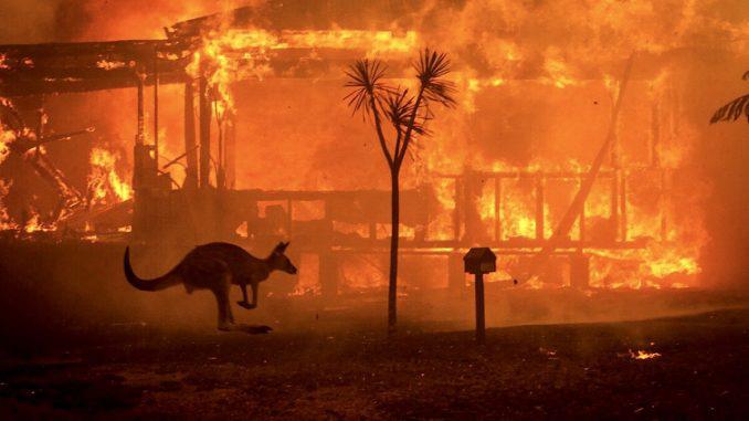 youchamp-app-australia-fires-donation